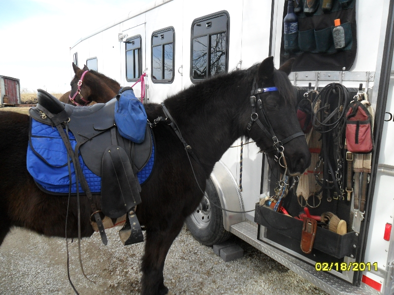 Levis in his BioThane Beta Tack Outfit.  Black with Royal Blue Accents