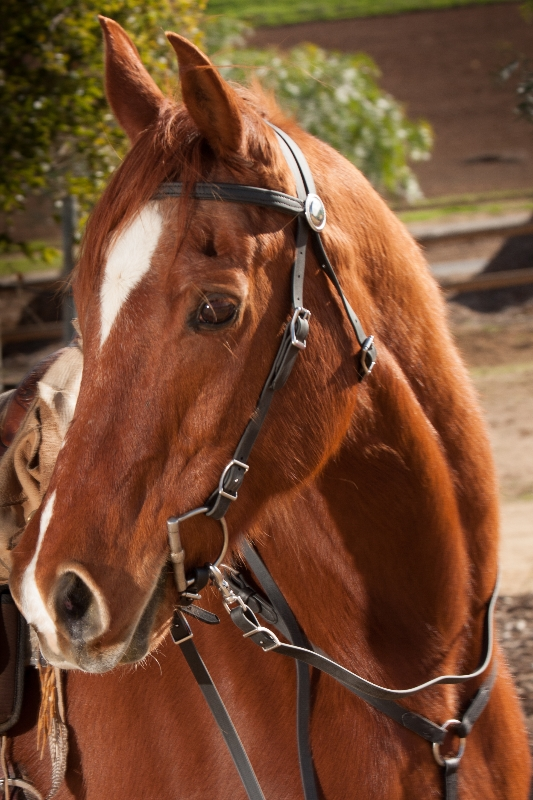 Boogie in SpecTACKular Horse Tack