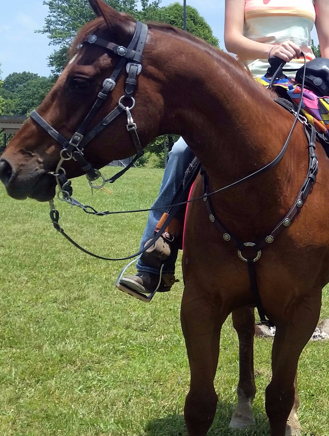 Echo in his SpecTACKular Halter Bridle and Breast Collar in Black Beta