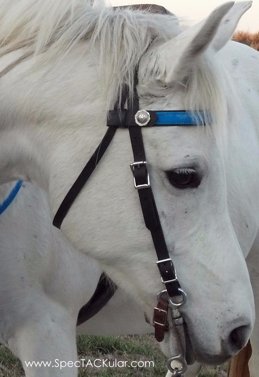 SpecTACKular Western Bridle with Changeable Browband in Caribbean Blue