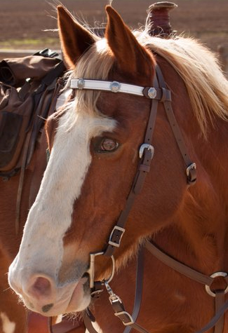 SpecTACKular Classic Western Bridle with Changeable Browband in Gloss White with Conchos