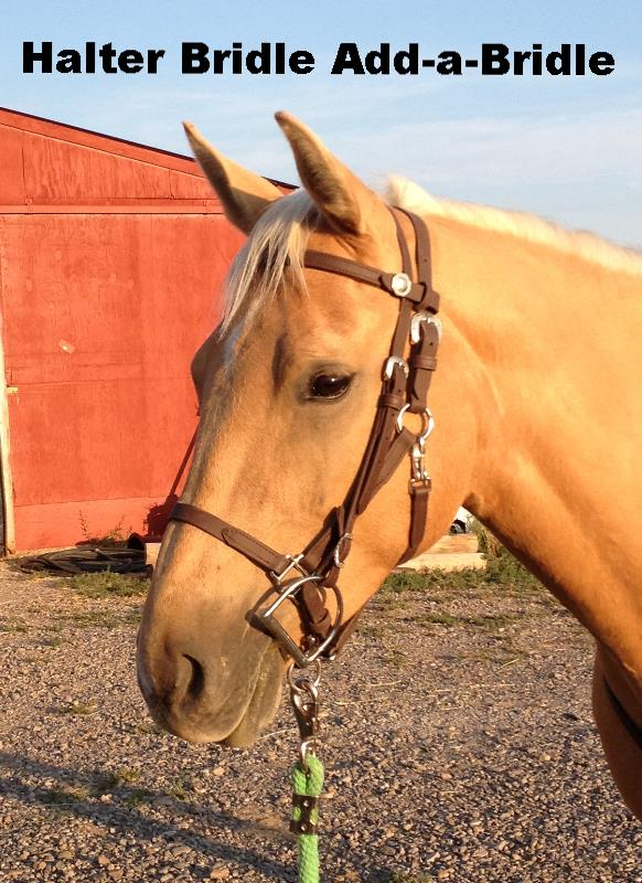 SpecTACKular Halter Bridle Combo Add-a-Bridle Style - Classic in Chocolate Brown BioThane Beta