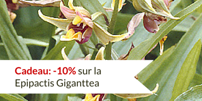 Les Orchidées Epipactis en avant ce week-end du 9 mai 2015