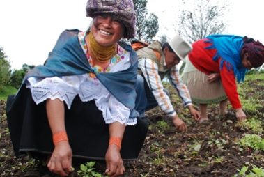 Latin American farms weed their small farm plots by hand. Image credit: ACDI/VOCA