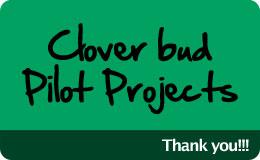 Clover bud Pilots