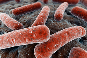 Bacteria (Eraxion/iStock/Getty Images)