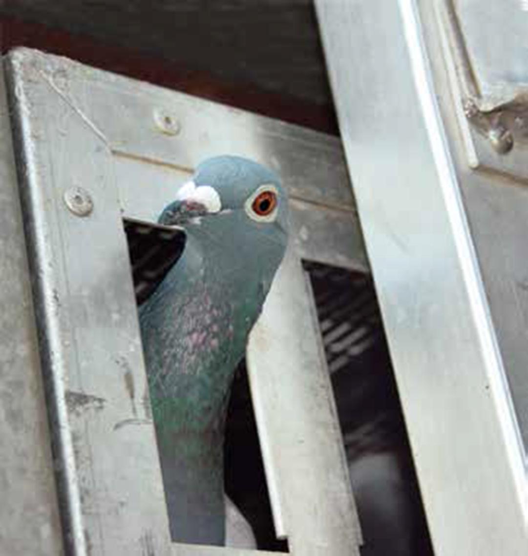 Gezondheidszorg duiven