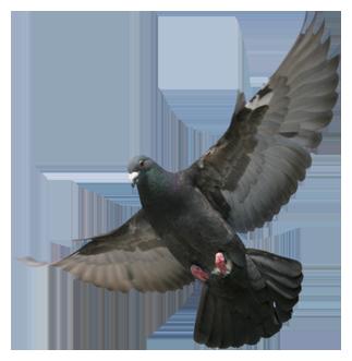 Pigeonvetcenter