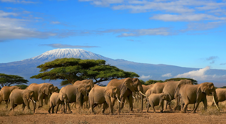 Flights to Nairobi from $810