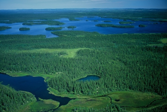 Boreal Forest aerial view