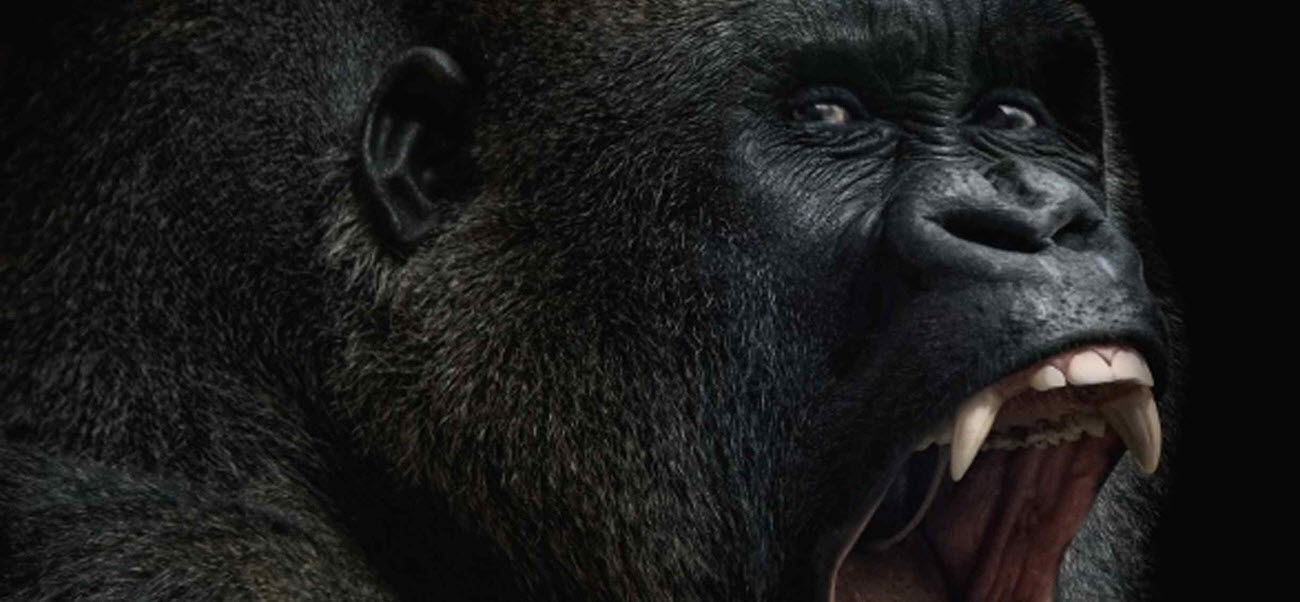 """Starwarp Concepts Adds """"King Kong"""" On Sale Now"""