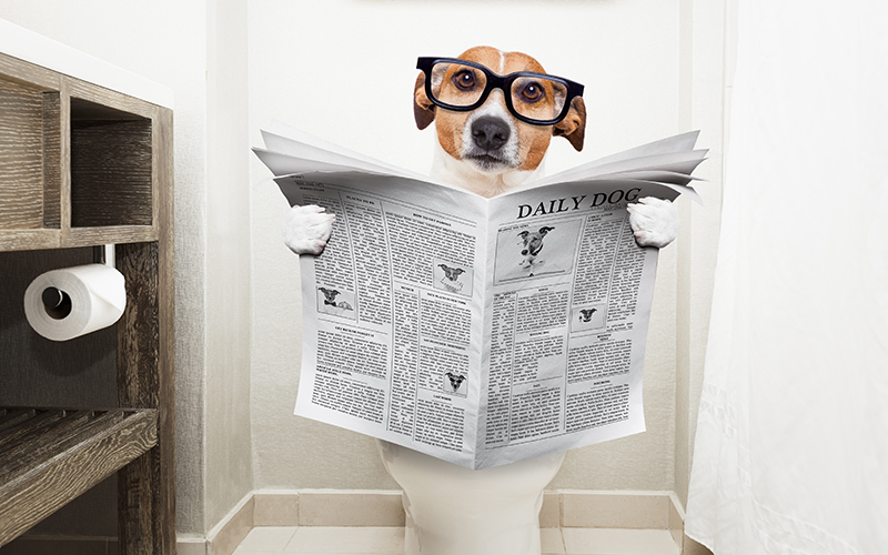 Potty training your dog