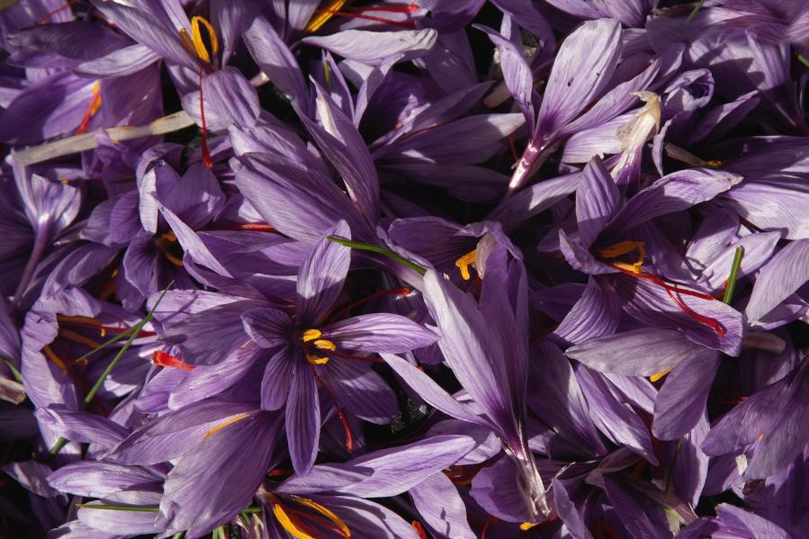 Safranblüten