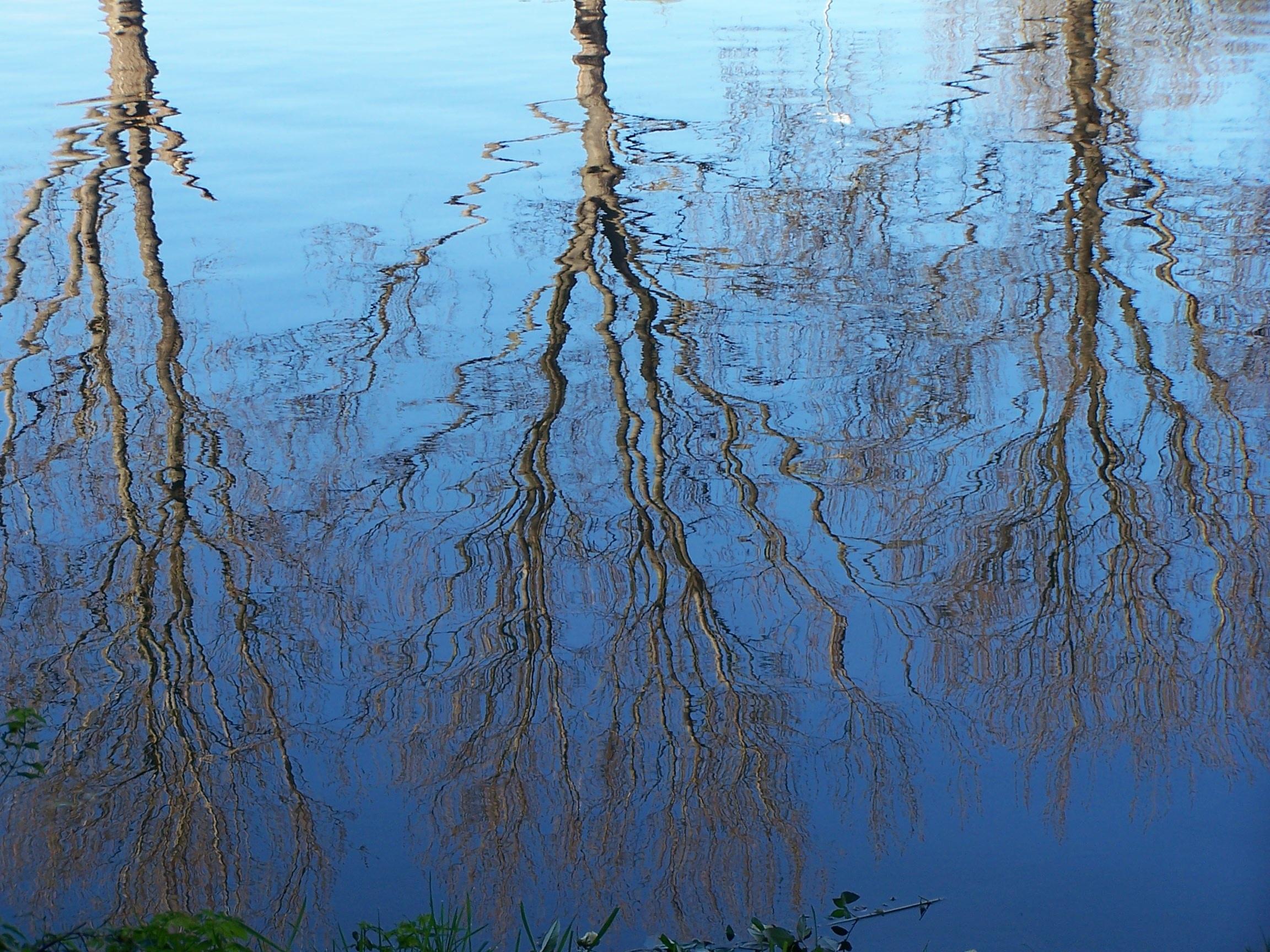 bomenreflectie in water roskencoaching