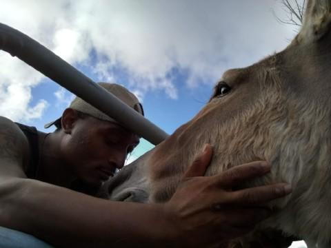 Jody tending to Eddie, the donkey