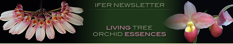 Living Tree Orchid Essences