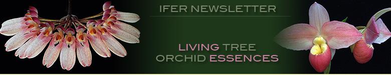 Living Tree Orchid Essences