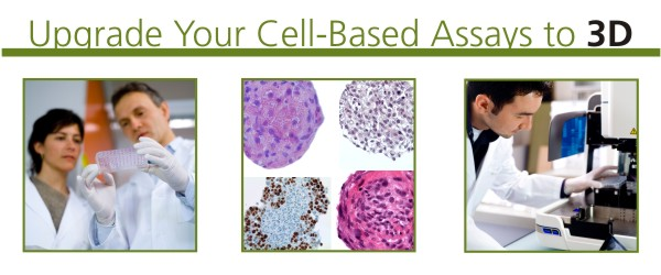 Upgrade Your Cell-Based Assays to 3D