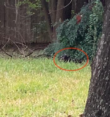 Rugs under tree