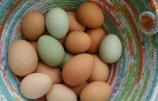 A Custom Egg Basket for Little Hawk Farm
