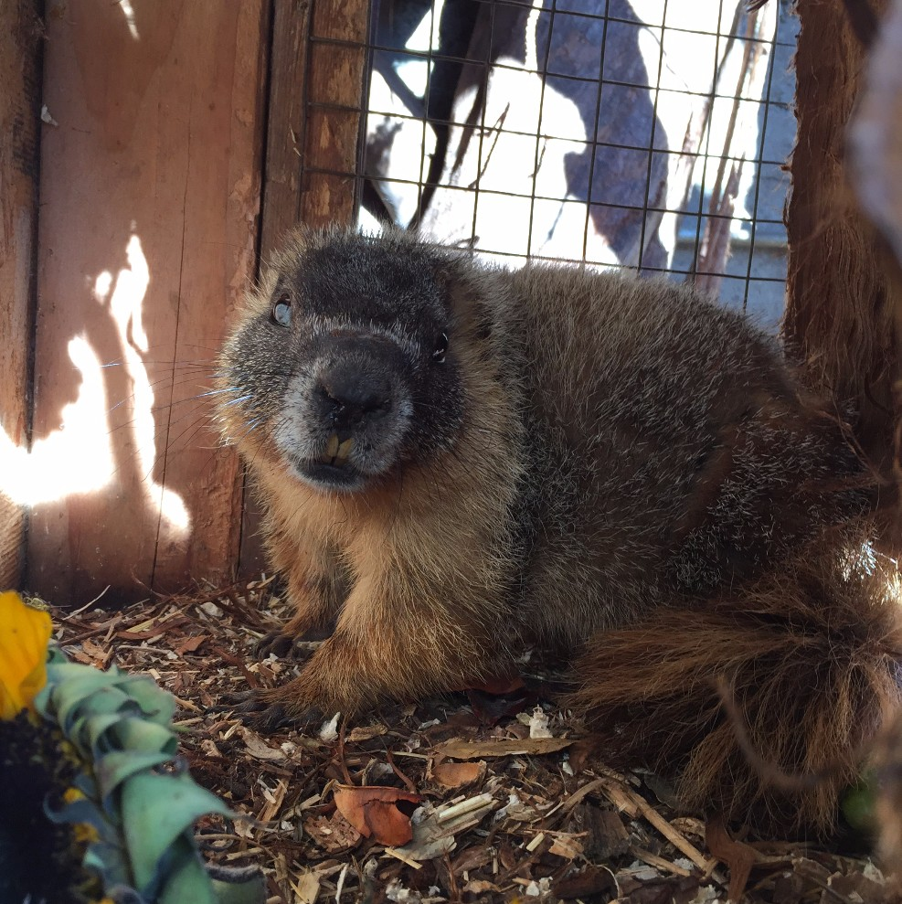 Click here to see the video of our Marmot
