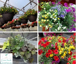 Hanging Basket varieties made by Greenbush Greenhouses