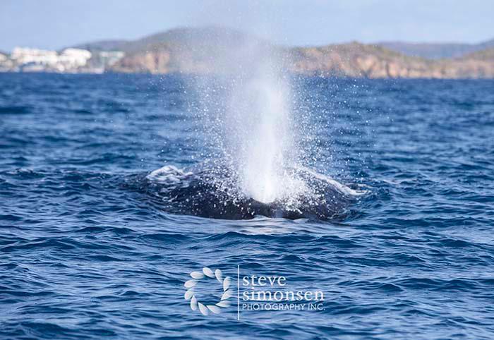 st john usvi whales