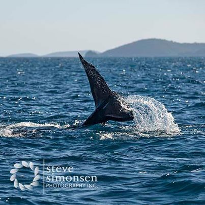 st john usvi whale sightings