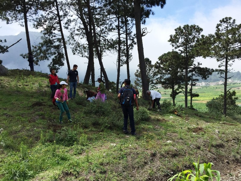 Reforestation in Llanos del Pinal