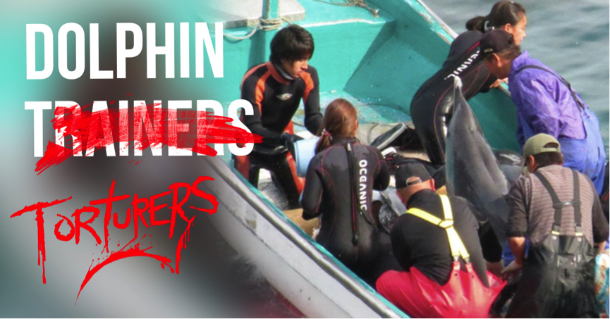 Trainers take dolphins out of the wild, leaving their family for slaughter.
