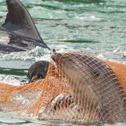 Not good enough SeaWorld