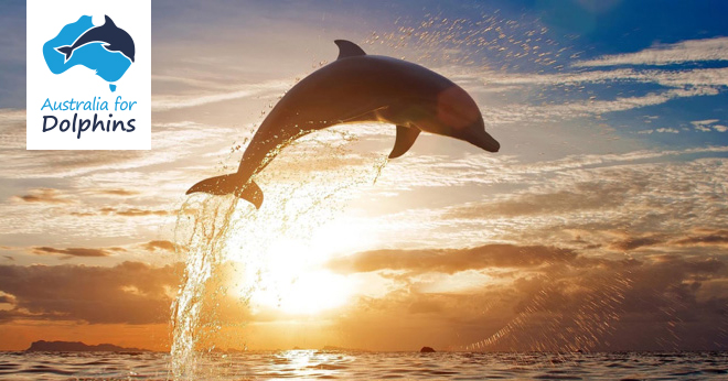 Dolphin abuse around the world