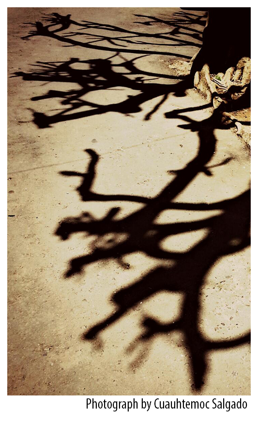 Tree Branch Silhouettes