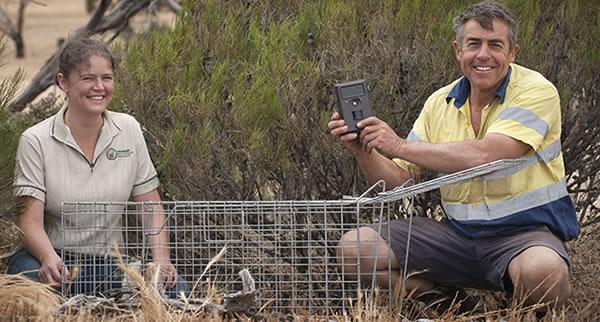 Traps to target Wheatbelt ferals