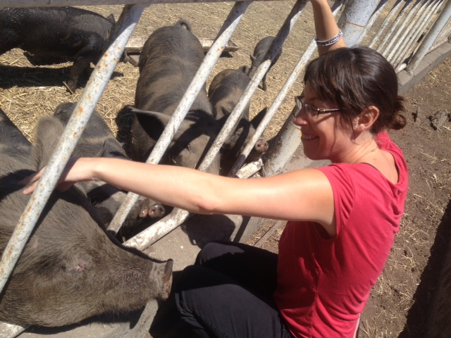 Maggie and pigs