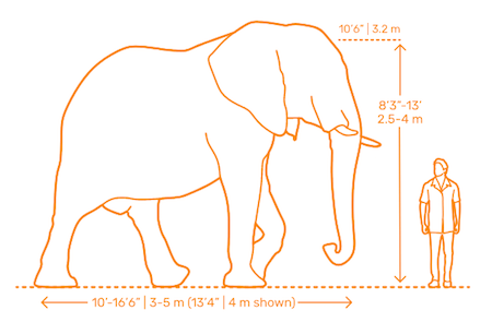 A dimensioned drawing of an elephant