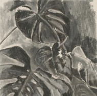 Amla Deaslae - Contemporary Charcoal Drawing, Study of a Cheese Plant