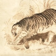 H.J. Mitchell - Late 19th Century Lithograph, Study of a Tiger