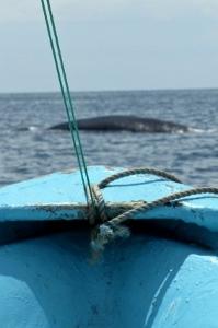 Seafarin' Kayakers trip to Playa El Colorado: April 17