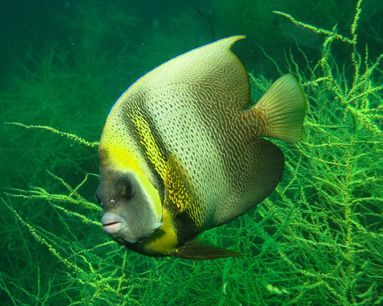 diving san carlos