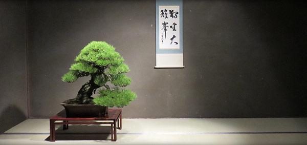 bonsai tree signup
