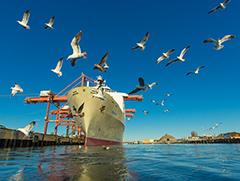 Birds, blue skies, clear water in Port