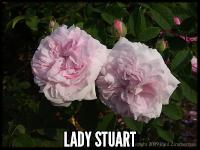 Lady Stuart