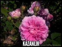 Kazanlik