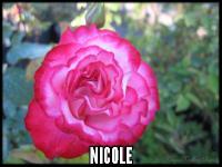 Nicole (Hannah Gordon)