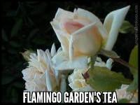 Flamingo Garden's Tea
