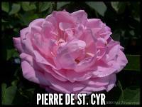 Pierre de St. Cyr