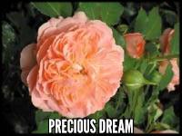 Precious Dream