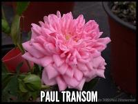 Paul Transom