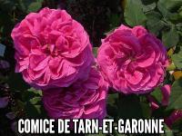 Comice de Tarn-et-Garonne